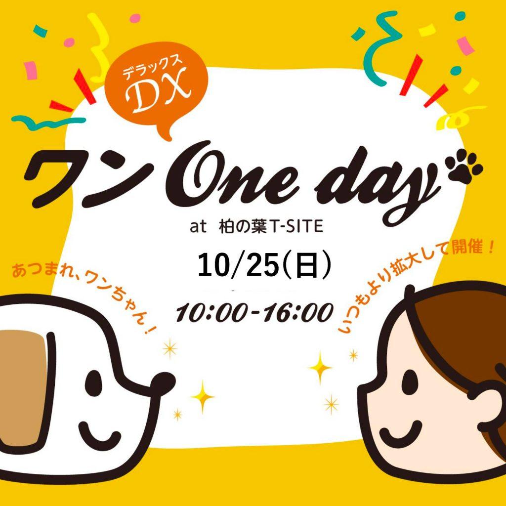 ワンOnedayDX_10月25日(日)